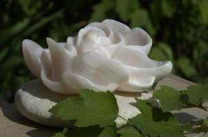 Harmonie - fleur de lotus