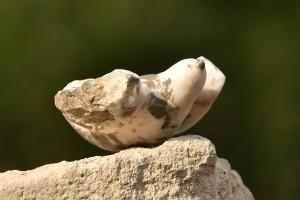 Sculpture d'un oiseau de Dominique Rivaux - Premier envol